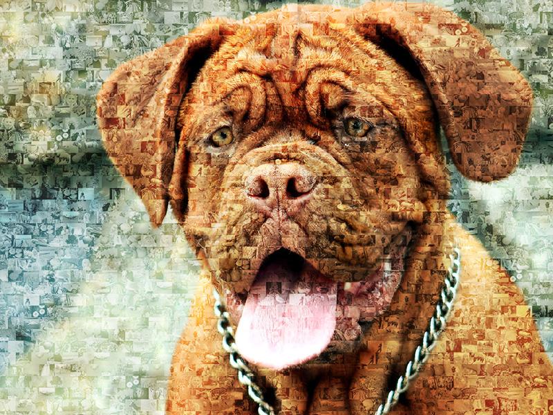 Fotomosaik aus Hundebilder