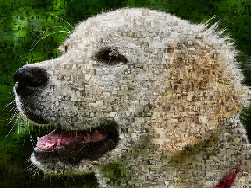 Fotomosaik auf Hundebildern