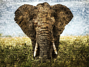 Photo mosaic elephant3