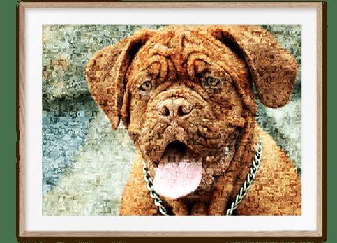Stolz wie Oscar- Bordeaux Dogge als Fotomosaik