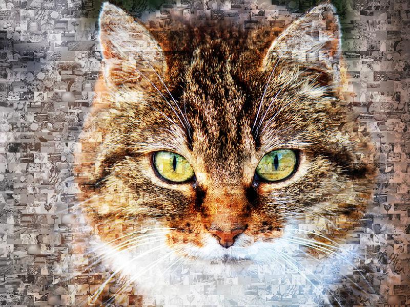 Unvergessene Katzenaugen als Fotomosaik