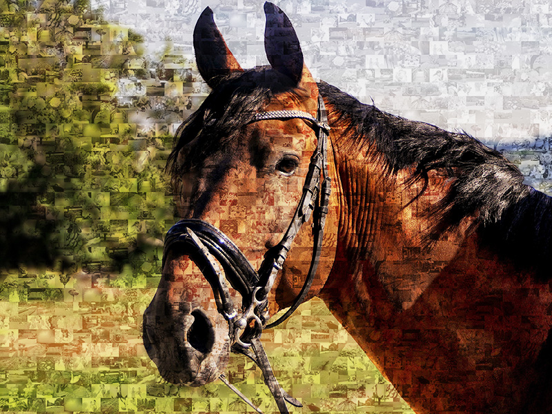 Fotomosaik aus Pferdebilder